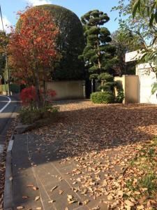 自宅前の落ち葉